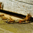 Bees at the entrance. — Stock Photo #30659687