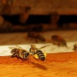 Bees at the entrance. — Stock Photo #30659795
