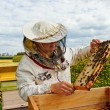 Working apiarist. — Stock Photo #30659893