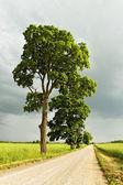 Landweg. — Stockfoto