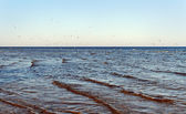 Birds and sea. — Stock Photo