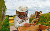 Working apiarist. — Stock Photo
