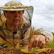 Stockfoto: Working apiarist.
