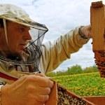 工作 apiarist — 图库照片