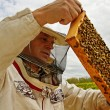 Stock Photo: Working apiarist.