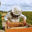 Photo: Working apiarist.