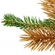 Stockfoto: Twigs of fir- tree.