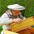 Working apiarist. — Stockfoto