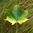 Fall leaf. — Stock Photo