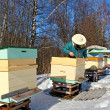 Stock Photo: Apiarist in winter season.