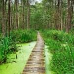 Wood footpath. — Stock Photo