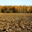 Stock Photo: Cultivated land.