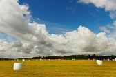 White plastic hay bales. — Stock Photo