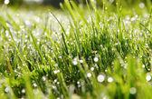 Gotas de agua sobre la hierba. — Foto de Stock