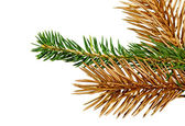 Twigs of fir- tree. — 图库照片