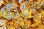 Vintern leafs. — Stockfoto