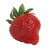 Červená jahoda. — Stock fotografie