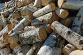 Birch firewood. — Stock Photo