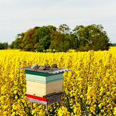 Beehive on the field. — Stock Photo