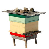 Beehive on wite surface. — Stock Photo