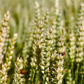 Tierras cultivadas. — Foto de Stock