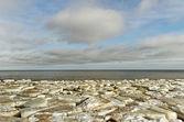 The sea in ice. — Foto Stock