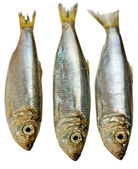 Three Baltic herrings. — Stock Photo