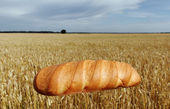 Bread and field. — Stock Photo