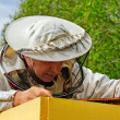 Working apiarist. — Foto de Stock