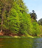 River Dunajec. — Stock Photo