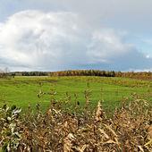 Green meadow. — Zdjęcie stockowe