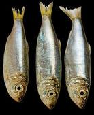 Three Baltic herrings. — Stock Photo