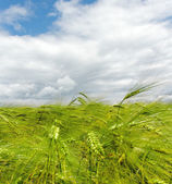 Cultivated land. — Stock Photo
