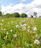 Uncultivated field. — Stock Photo