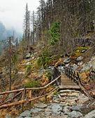 Mountain landscape. — Стоковое фото
