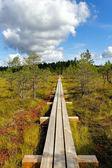 Kemeri National park. — Stock Photo