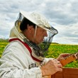 Stock Photo: Beekeeper is working.