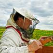 Beekeeper is working. — Stock Photo
