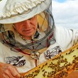 ストック写真: Beekeeper is working.