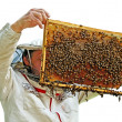 Beekeeper is working. — Stock Photo #38666189