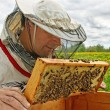 Working apiarist. — Stock Photo #38666359