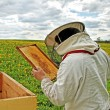 Working apiarist. — Stockfoto #38666363