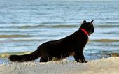 Black cat at the sea. — Stock Photo