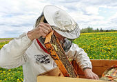 Beekeeper is working. — Stok fotoğraf