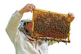 Beekeeper is working. — Stock Photo
