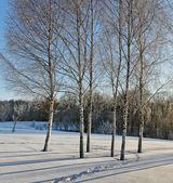 Zimní krajina. — Stock fotografie