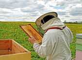 Working apiarist. — Foto Stock