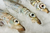 Baltic herring. — Stock Photo