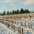 Field under snow. — Stock Photo
