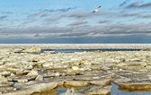 балтийское море. — Стоковое фото